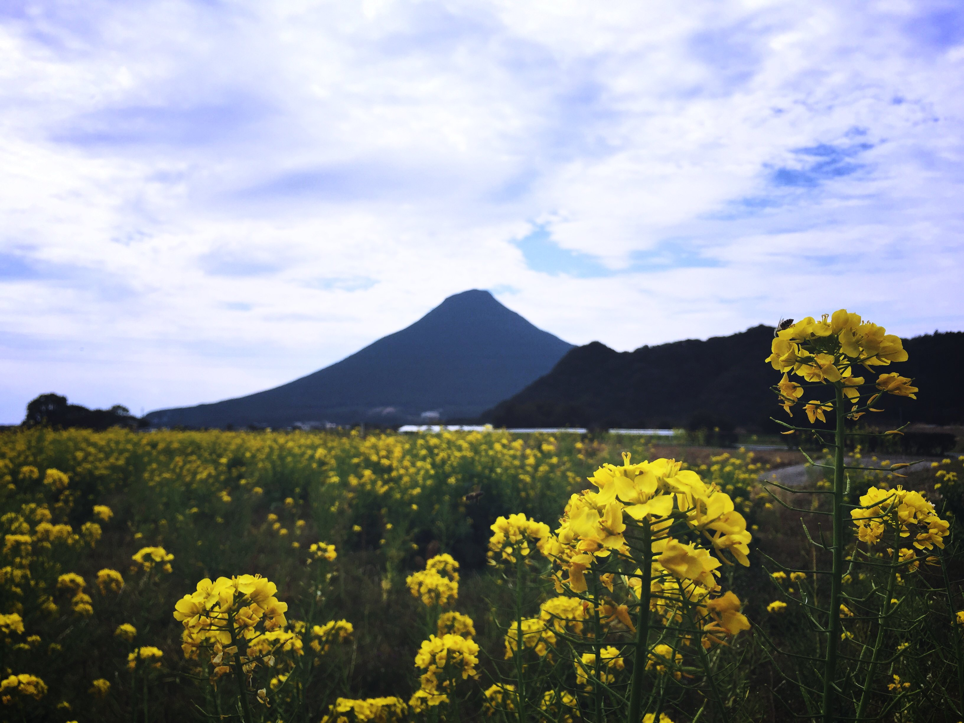 いざ日本百名山。開聞岳登山でingressミッション開始!