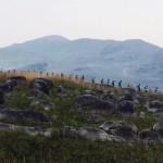 平尾台トレイル&霧島えびの高原エクストリームトレイル。九州を代表する2大トレイルにエントリー!