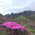 ガスに包まれた阿蘇山登山。中岳山頂50m前で噴火立ち入り規制。そりゃないよ。