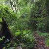第2回鏡洲の森トレイル 滑って転んでまた滑る