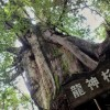 益救参道から龍神杉・雷神杉・風神杉へ 2015年屋久島2泊3日南北縦走【1日目】