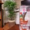 観葉植物をiPhoneで管理。Parrot Flower Powerを使って今度こそ枯らさない!