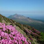 2016年韓国岳のミヤマキリシマ